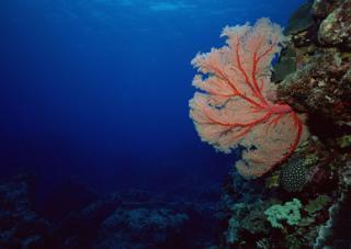 Кораллы доросли до человеческой днк