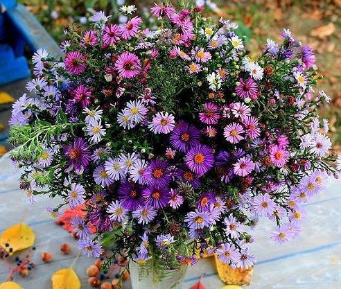 Необычайной красоты цветы