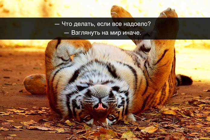 http://content.foto.my.mail.ru/community/funny_cards/_groupsphoto/h-9839.jpg