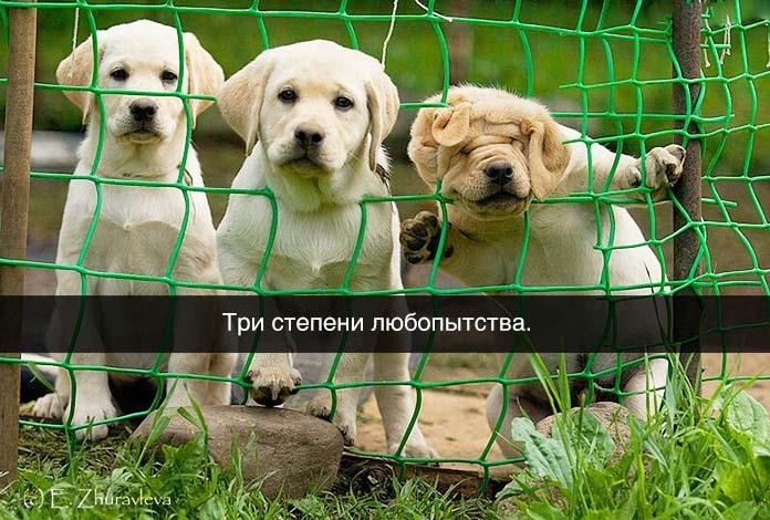 http://content.foto.my.mail.ru/community/funny_cards/_groupsphoto/h-9958.jpg