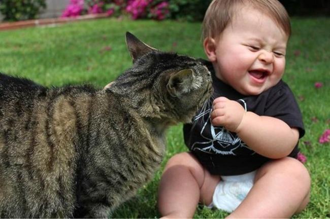 Коты, из которых получились прекрасные няни