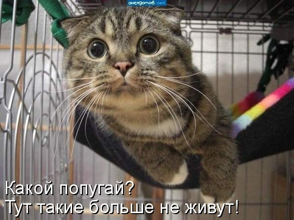 http://content.foto.my.mail.ru/community/prikolist2014/_groupsphoto/h-14.jpg