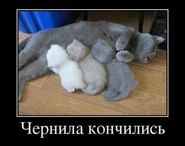 http://content.foto.my.mail.ru/community/prikolist2014/_groupsphoto/h-20.jpg