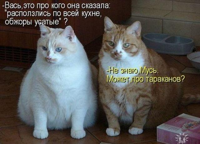 http://content.foto.my.mail.ru/community/prikolist2014/_groupsphoto/h-32.jpg