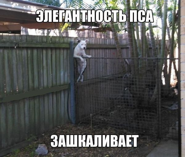 http://content.foto.my.mail.ru/community/shut_nik/_groupsphoto/h-2757.jpg