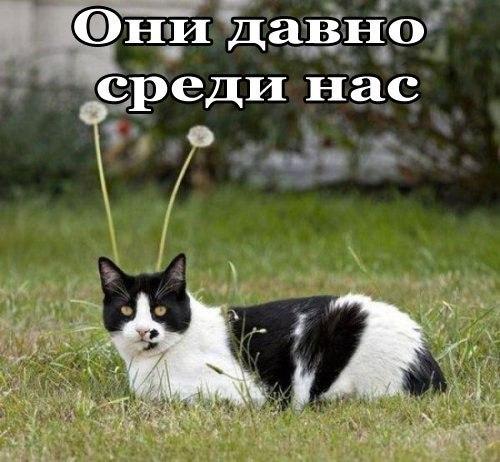 http://content.foto.my.mail.ru/community/yumorfm.ru/_groupsphoto/h-1867.jpg