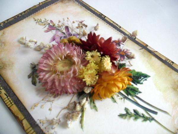гербарий из цветов фото: