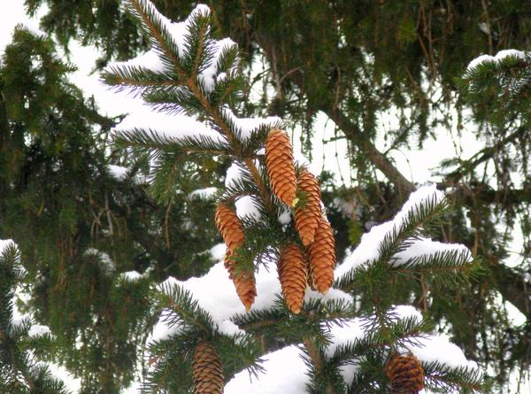 Метки cht зима природа