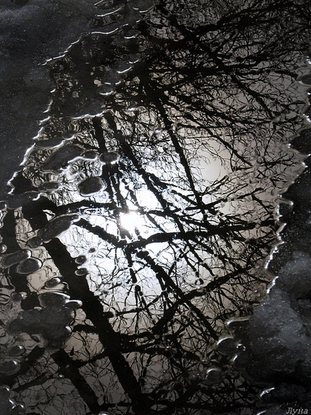 фотоконкурс отражение в природе