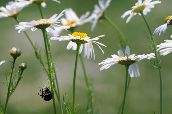 Полевые цветы июнь