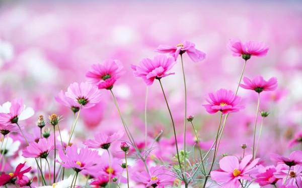 Полевые цветы на рассвете 52