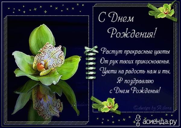 Открытка с днём рождения девушке красивые поздравления с орхидеей