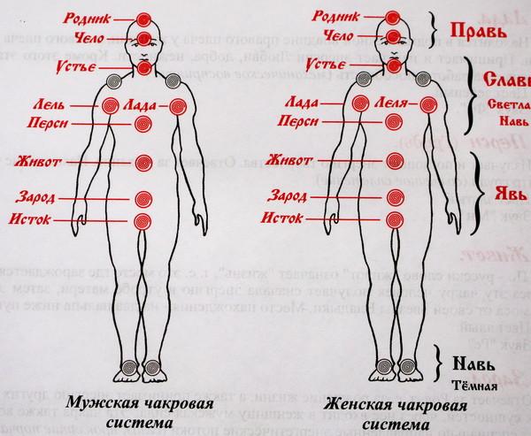 нижние 3 чакры системы ХА
