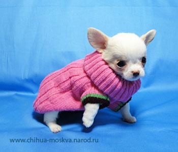 модные тенденции одежды зимой