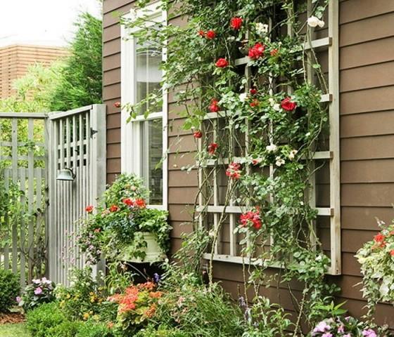 Шпалеры для плетистых роз своими руками фото
