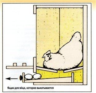 Как правильно сделать гнездо для кур несушек чтобы не клевали яйца