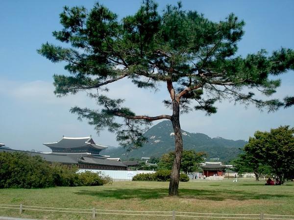 День посадки деревьев в Южной Корее I-290