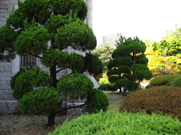 День посадки деревьев в Южной Корее I-291