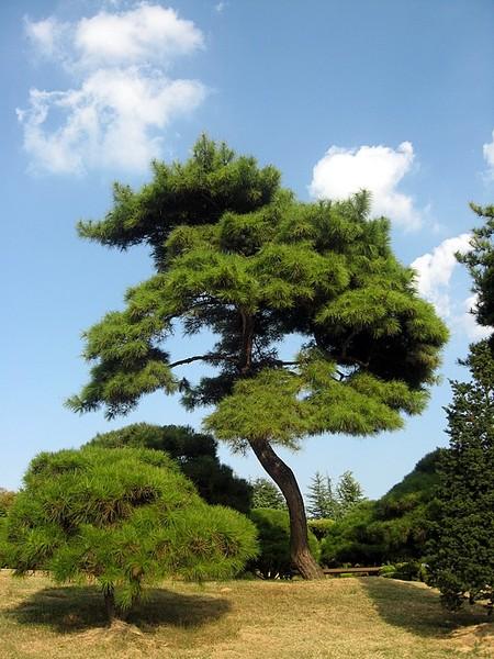 День посадки деревьев в Южной Корее I-292