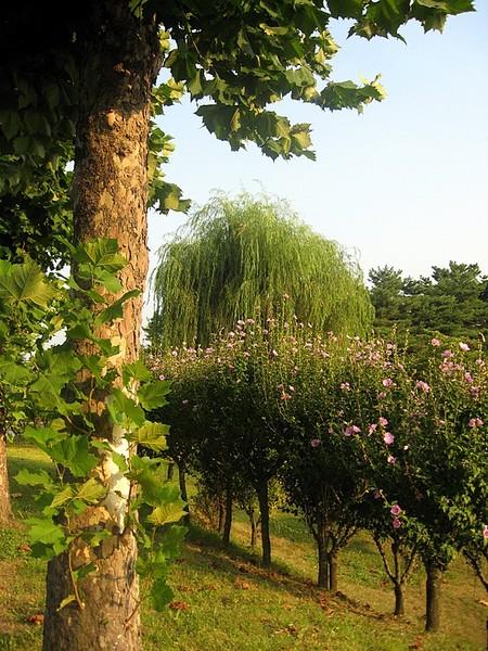 День посадки деревьев в Южной Корее I-293