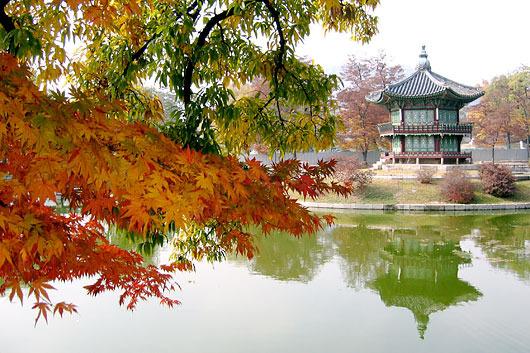 День посадки деревьев в Южной Корее I-294