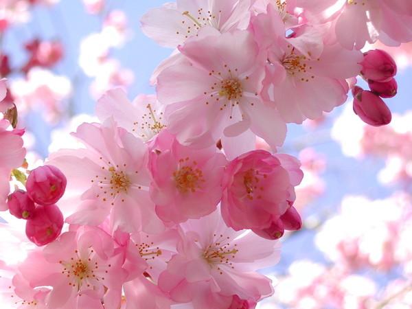 Весенние цветы I-437