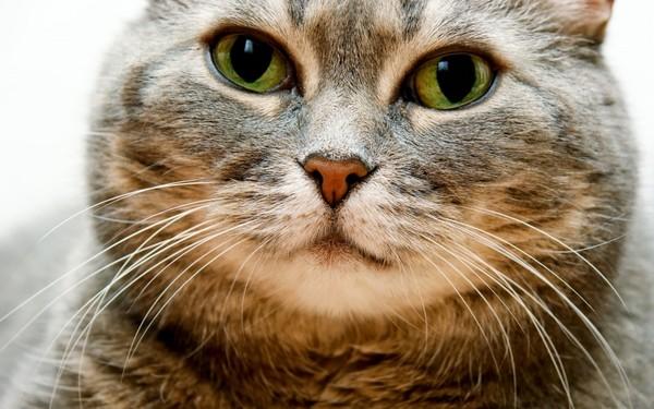 Кошки - наша радость и отдохновение! I-442