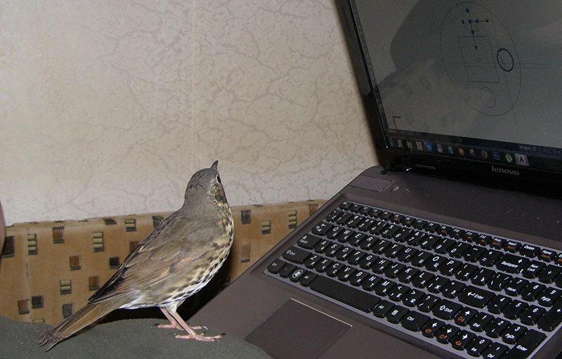 http://content.foto.my.mail.ru/mail/hummel9/158/h-159.jpg