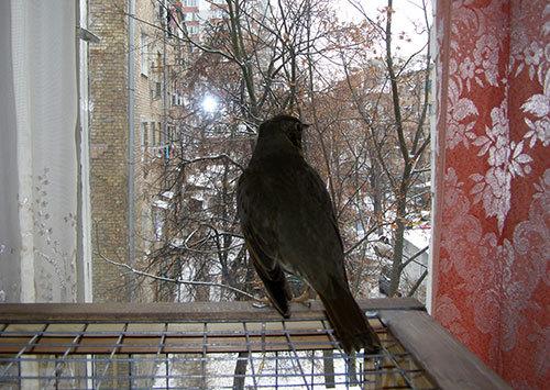 http://content.foto.my.mail.ru/mail/hummel9/315/h-327.jpg