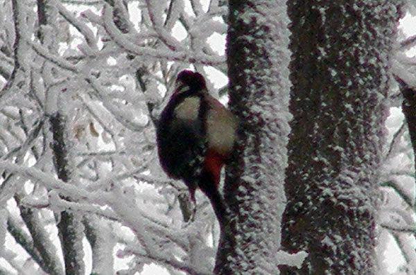 http://content.foto.my.mail.ru/mail/hummel9/315/h-342.jpg