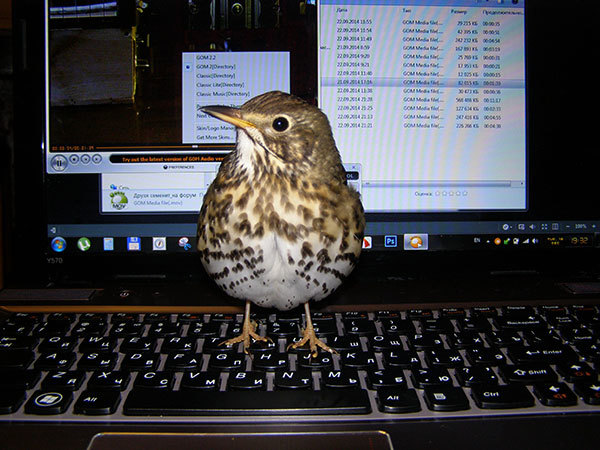 http://content.foto.my.mail.ru/mail/hummel9/315/h-367.jpg