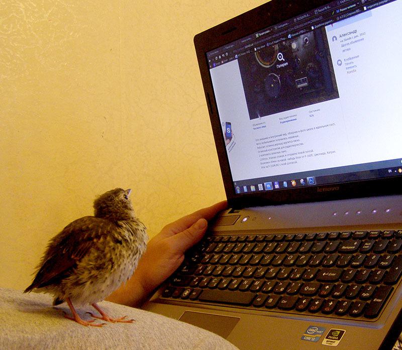 http://content.foto.my.mail.ru/mail/hummel9/46/h-59.jpg