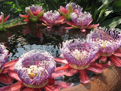 Фото самых красивых цветков