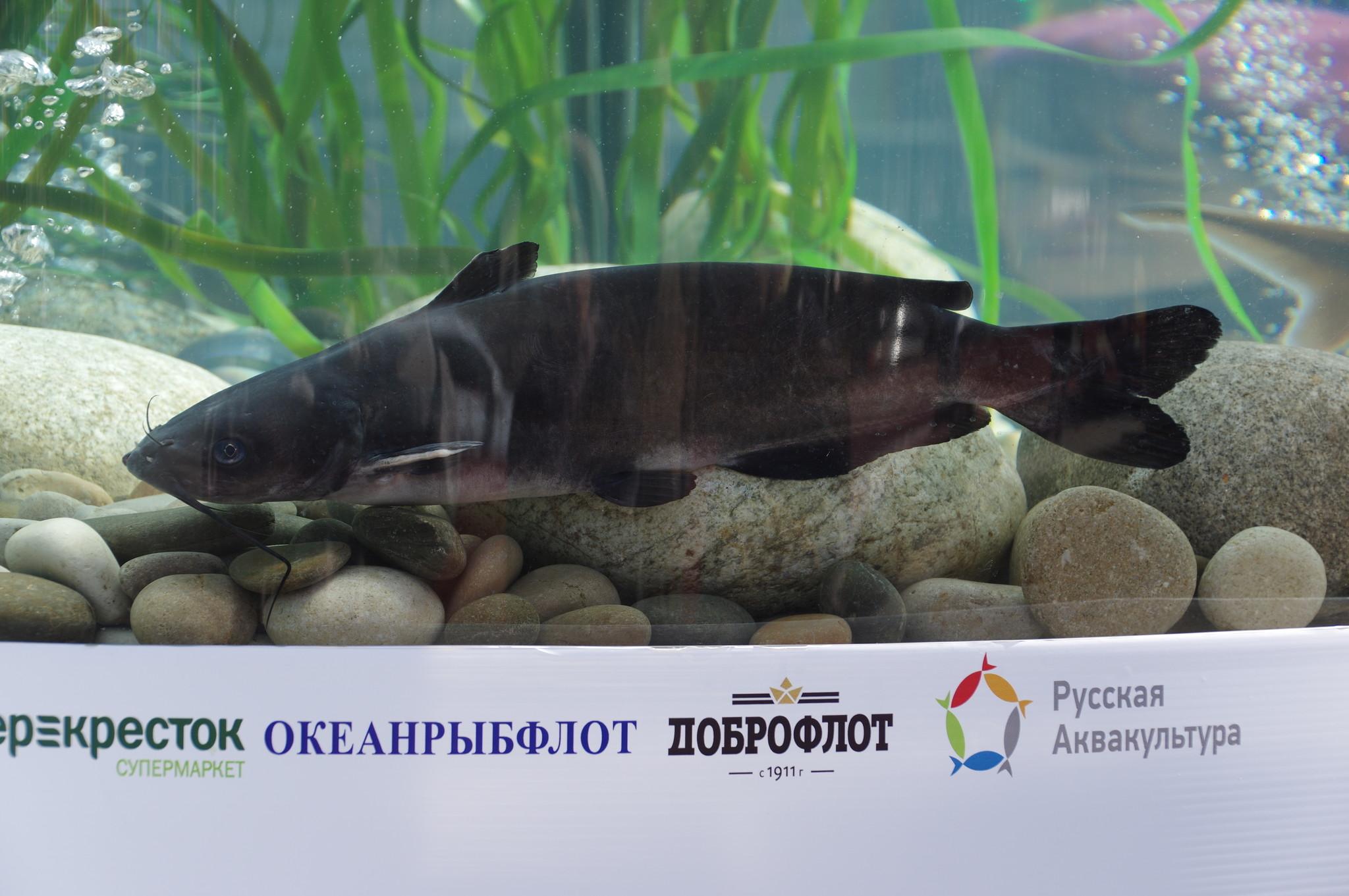 Фестиваль «Рыбная неделя» на Новопушкинской площади