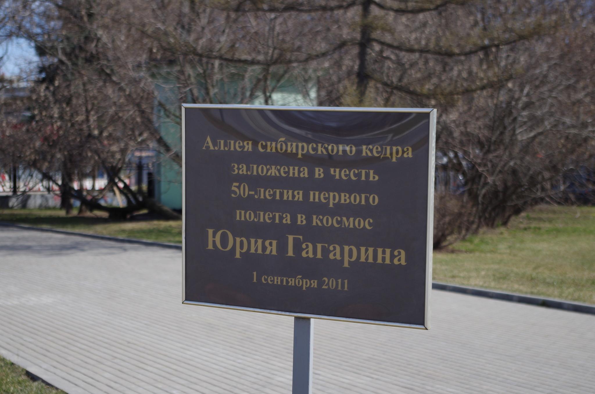 Аллея сибирского кедра в честь 50-летия полёта в космос Юрия Гагарина