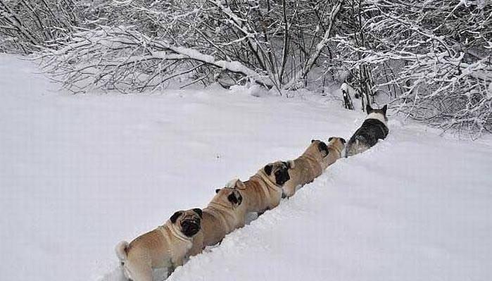 Смотреть фильм пальмы в снегу  бесплатно в