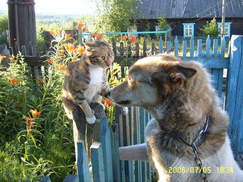 Чем отравить от соседских котов