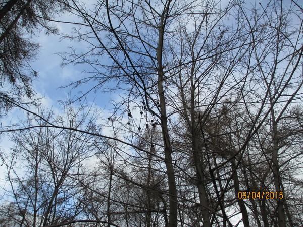http://content.foto.my.mail.ru/mail/olgadoct/24612/i-24859.jpg
