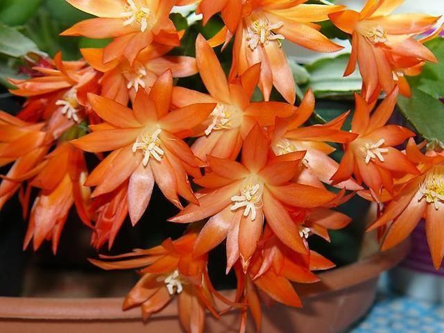 Кімнатні квіти