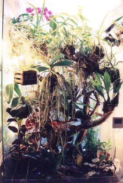 Выращивание эпифитов 96