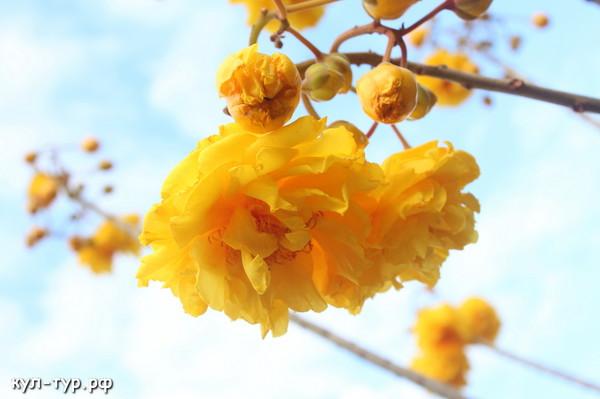 красивое дерево с цветами