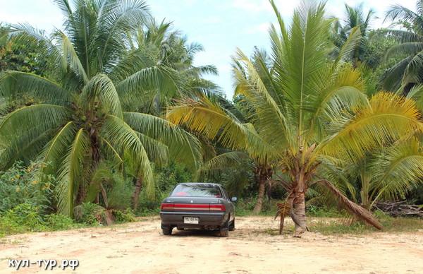на машине по джунглям