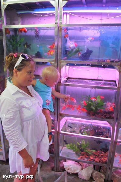 магазин аквариумных рыбок