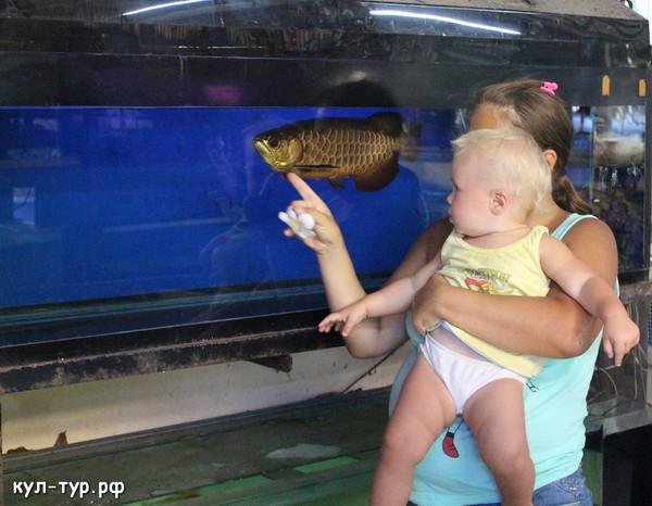 купить аквариумных рыбок