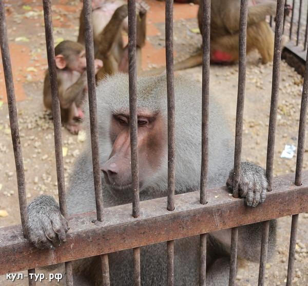 обезьяны в питомнике