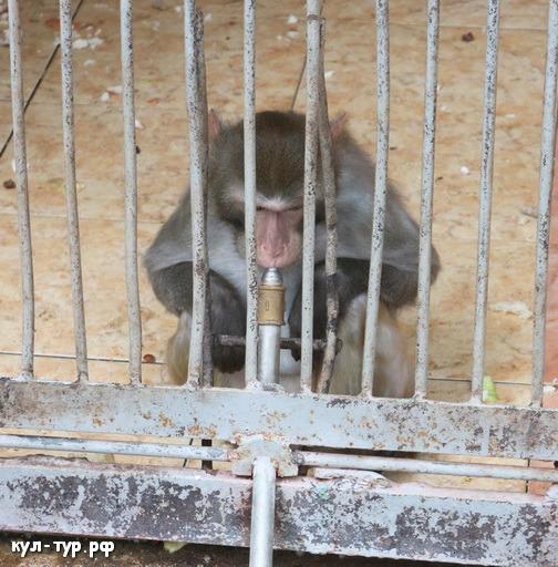 зоопарк обезьяны
