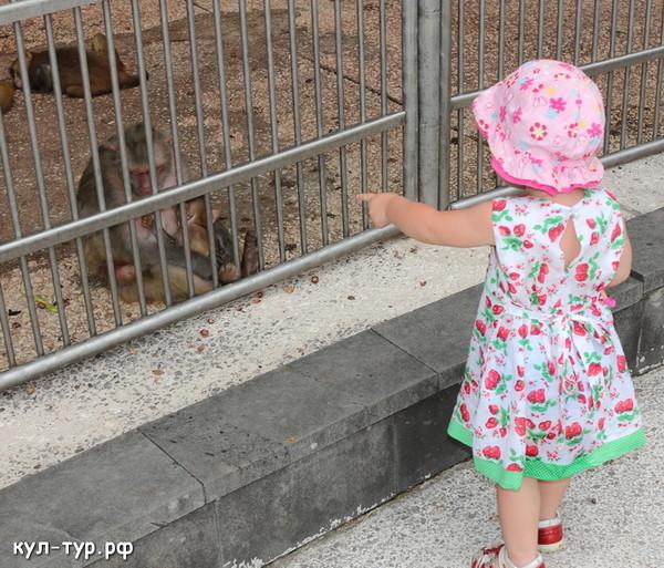 с ребёнком в обезьяньем питомнике
