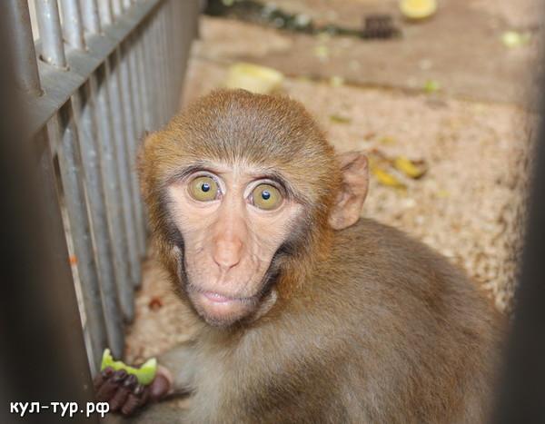 голодные обезьяны