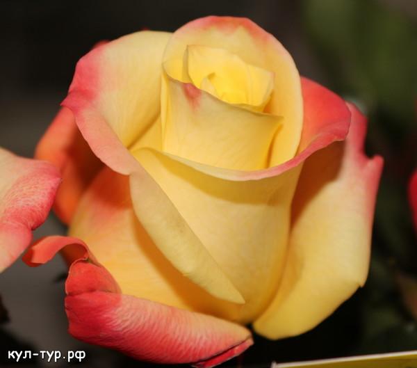 заказ роз