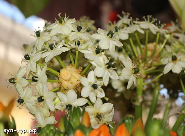 необычные цветы экзотика